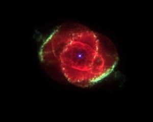 20231_Rose-of-Galaxy_400